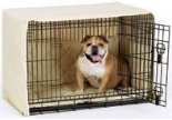 dog inside his dog crate outfitted with the side door cratewear set